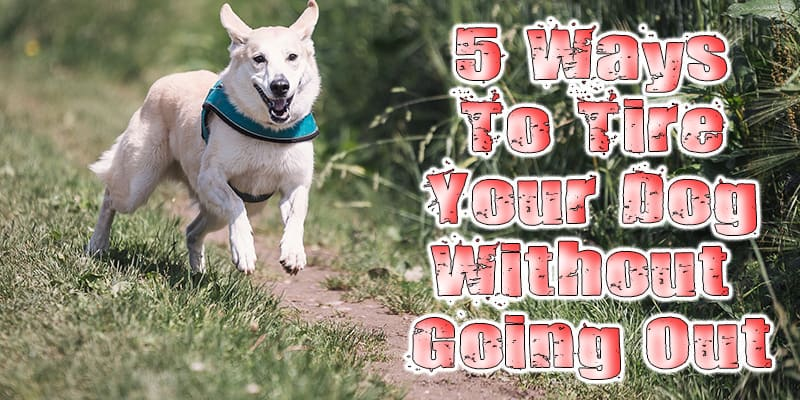 5 Ways to Tire Your Dog Without Going on a Walk
