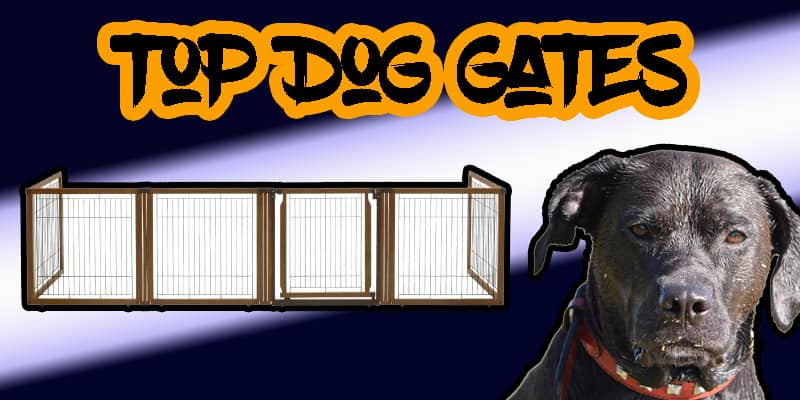 The Best 6 Dog Gates