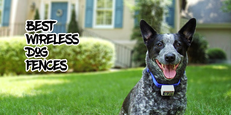 Top 6 Best-Rated Wireless Electric Dog Fence Systems