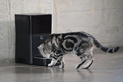 The Best Automatic Cat Feeders 13