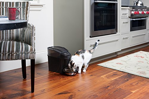 The Best Automatic Cat Feeders 2