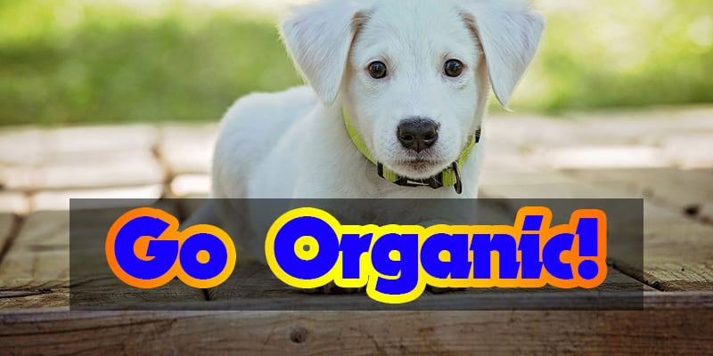 organic dog Food Today