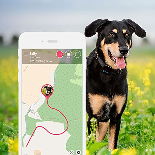 The Best GPS Dog Trackers 9