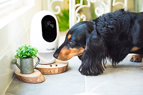 The 10 Best Pet Cameras 18
