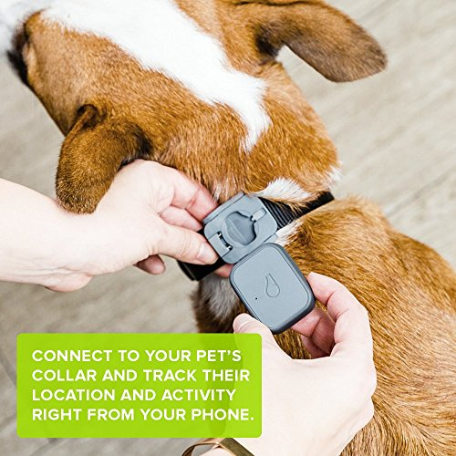 The Best GPS Dog Trackers 2