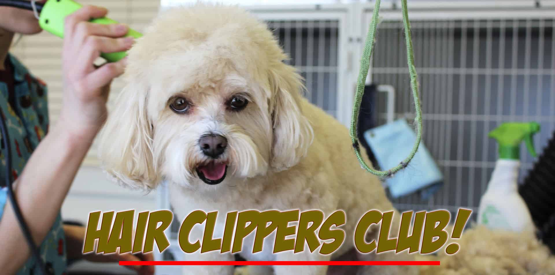 Hair Clippers Club