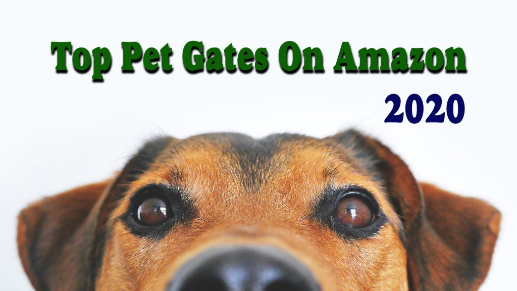 Top 5 Brands Of Pet Gates On Amazon in 2020